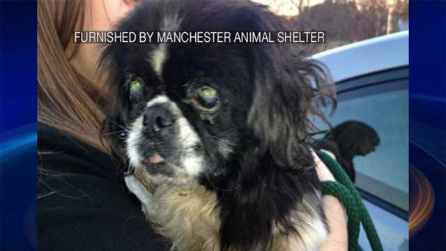 Dog abandoned in Manchester tree