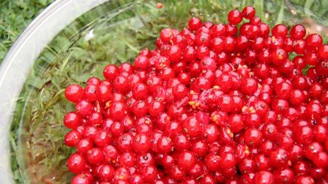 Currants in bowl