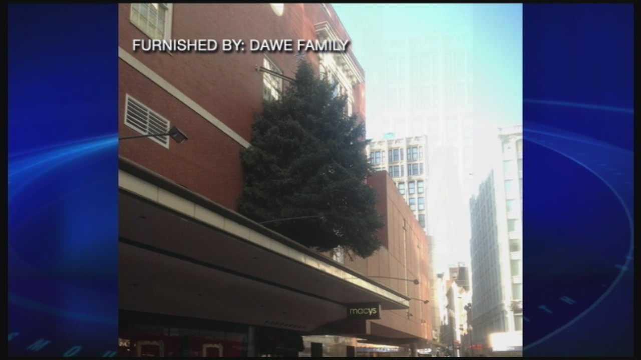 Hampton Falls tree selected by Macy's in Boston