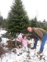 We combed through hundreds of nominations! Now, here's a look at the top Christmas tree farms in the Granite State, according to our viewers...