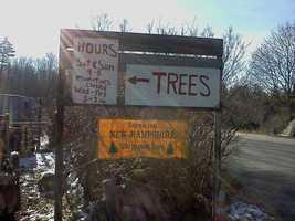 Tie-10) Coates Christmas Tree Farm in Keene