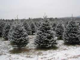 Tie-10) Olsen's Tree Farm in Jefferson