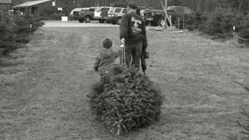 9) Dave's Christmas Tree Farm in Madbury