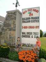 6) Weir Tree Farms in Colebrook