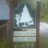 5) Finnegan's Fine Firs in Bethlehem