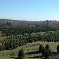2) Evergreen Ridge Tree Farm in New Durham