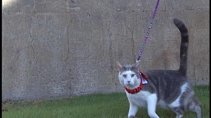 To adopt Rocky contact the Animal Rescue Network of New England:603-233-2872 &#x3B; or  www.ARNNE.org