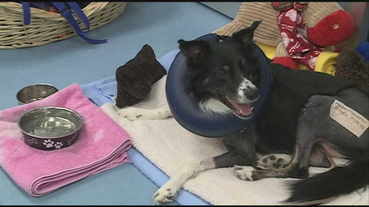 Molly the Dog continues to recover