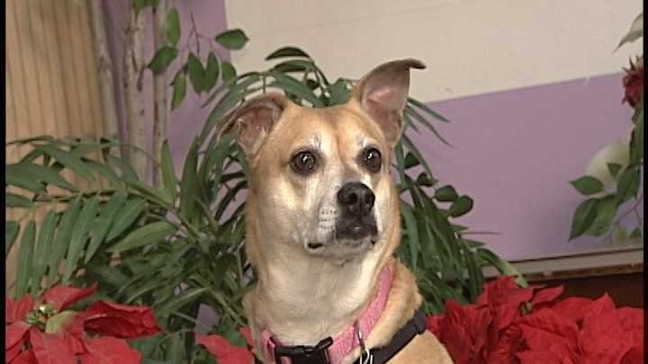 To adopt Katchy contact the Animal Rescue Network of New England:603-233-4801 &#x3B; www.ARNNE.org