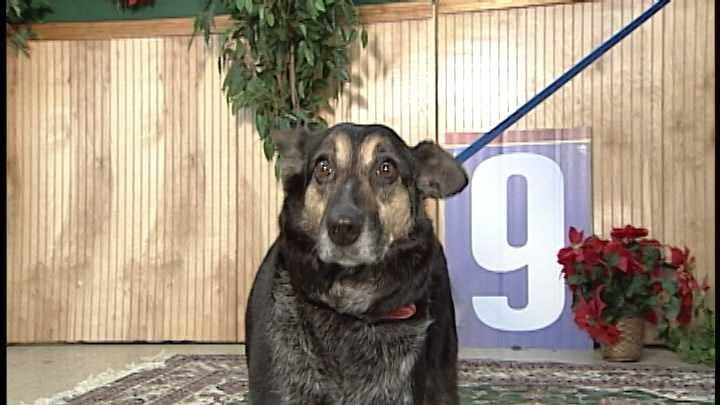 To adopt Millie, call 603-935-9199, or visit: www.TheNHDogCompany.com &#x3B; www.PAWSNewEngland.com