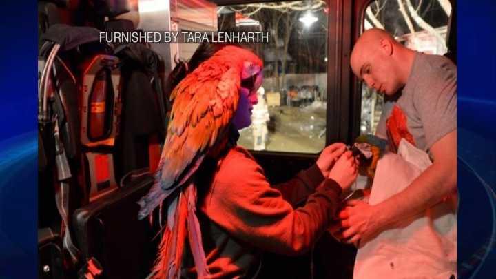 img-barrington fire birds.jpg