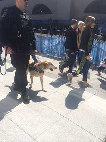 Boston police bomb detection dogs were seen throughout the finish line area.