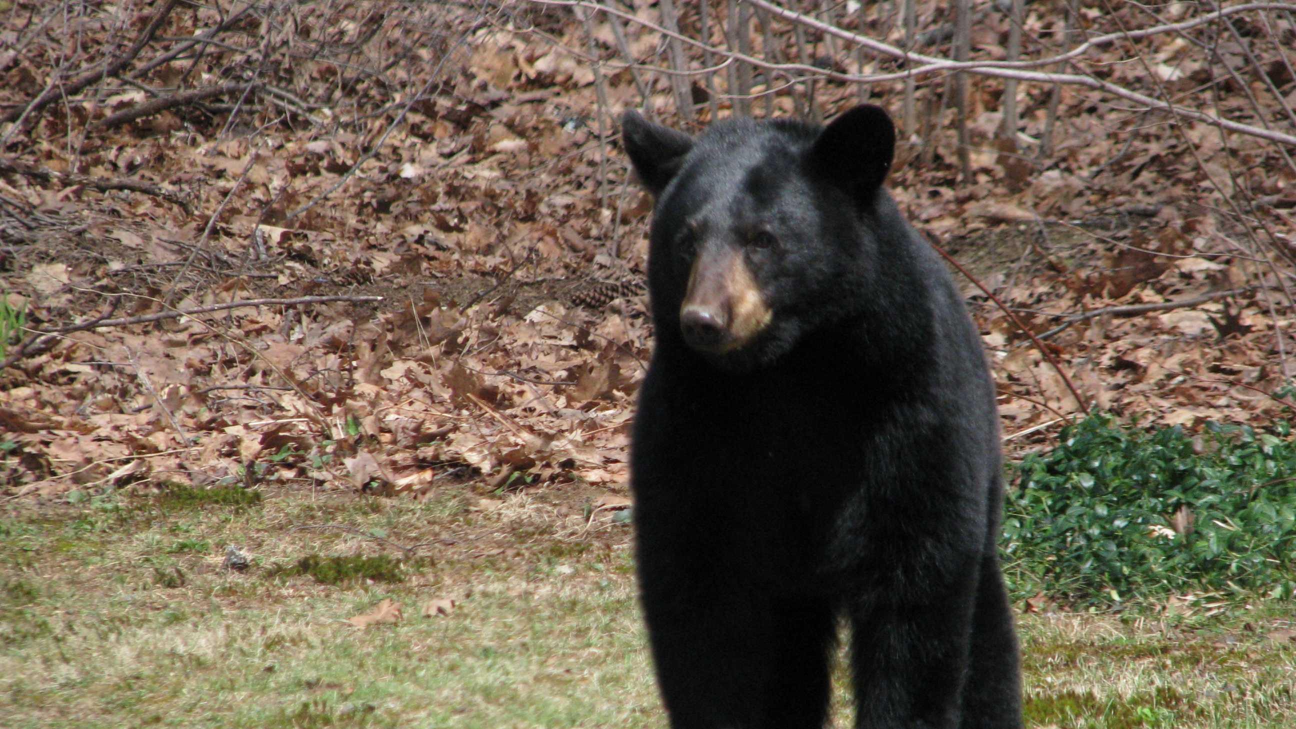 Bear feeder 3.JPG