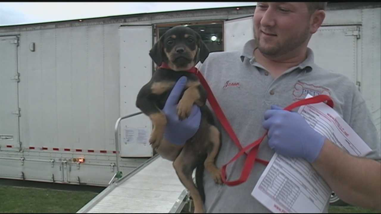 A special look at adopting dogs in New Hampshire.