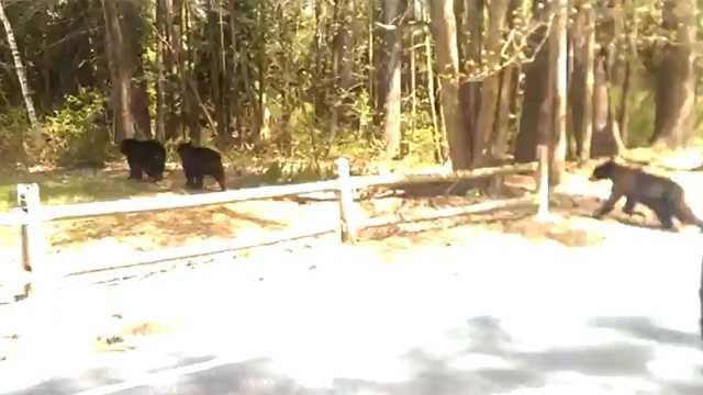 bears-Merrimack.jpg