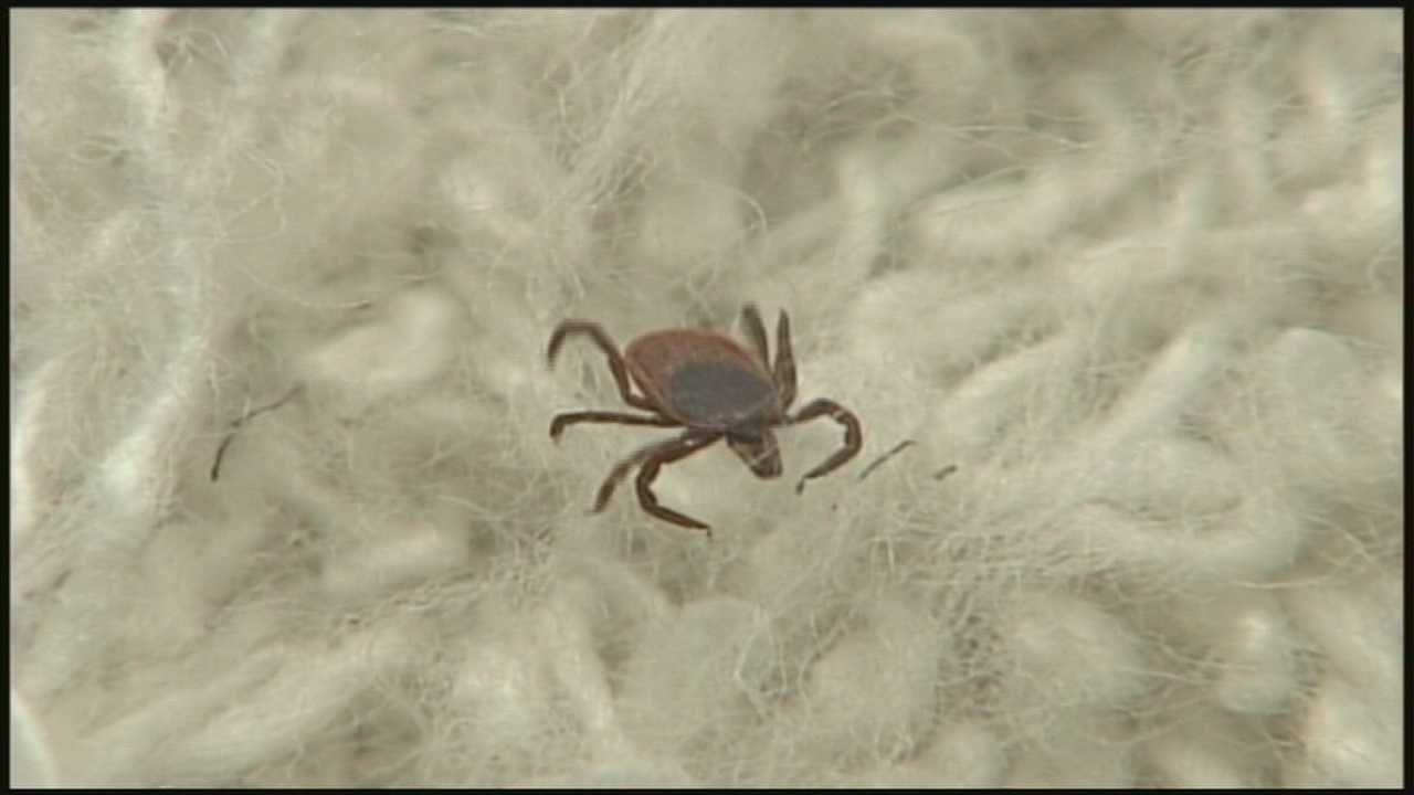 Health officials issue warning as tick season arrives