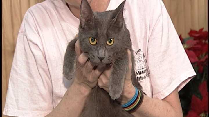 To adopt Olga, contact the Manchester Animal Shelter:Tel: 603-628-3544www.ManchesterAnimalShelter.org