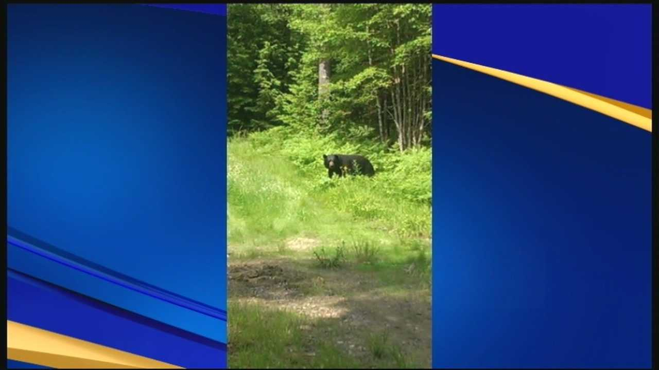 Officials: Rise in number of bears put down after encounters with people