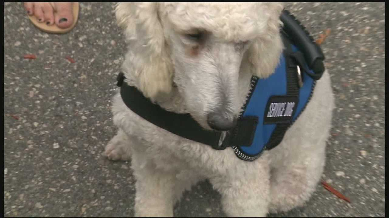 A retailer is apologizing to a survivor of the Boston Marathon bombings after she was told her service  dog would need to be put into a carriage while she shopped or would need to leave the store.