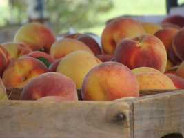 15. Union Lake Peach Orchard in Barrinton