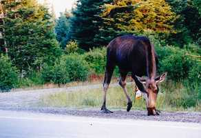 Spot a moose along Moose Alley in Pittsburg.