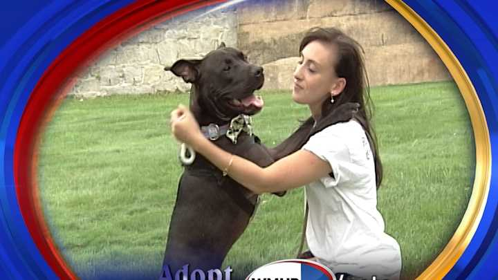 To adopt Drambuie, contact PAWS New England:www.pawsnewengland.com &#x3B; maryc.paws@gmail.com