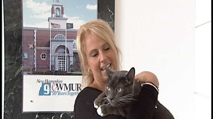 To Adopt Rocky contact the Animal Rescue Network of New England:603-233-4801 &#x3B; www.ARNNE.org