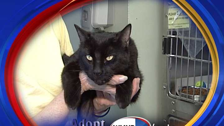 To adopt Espresso contact the Manchester Animal Shelter:603-628-3544&#x3B; www.ManchesterAnimalShelter.org