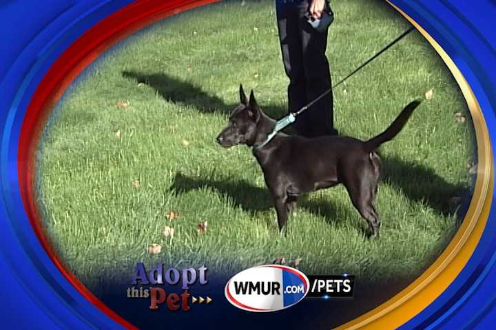 To adopt Petal contact the Animal Rescue Network of New England, which is in Pelham: 603-233-4801 &#x3B; www.arnne.org
