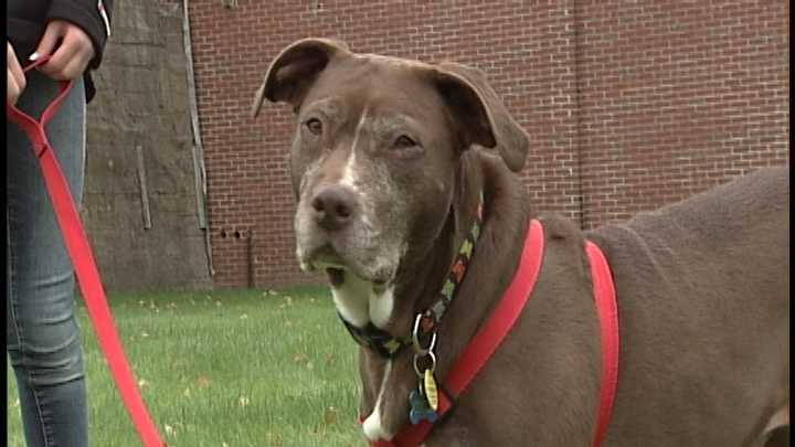To adopt Lini (Coco) contact Paws New England: www.PawsNewEngland.com &#x3B; or e-mail: maryc.paws@gmail.com