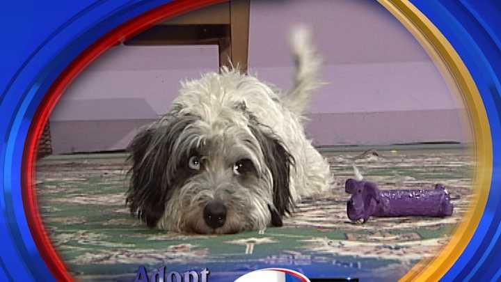 To adopt Rikki contact Pope Memorial SPCA:603-856-8756 &#x3B; www.PopeMemorialSPCA.org