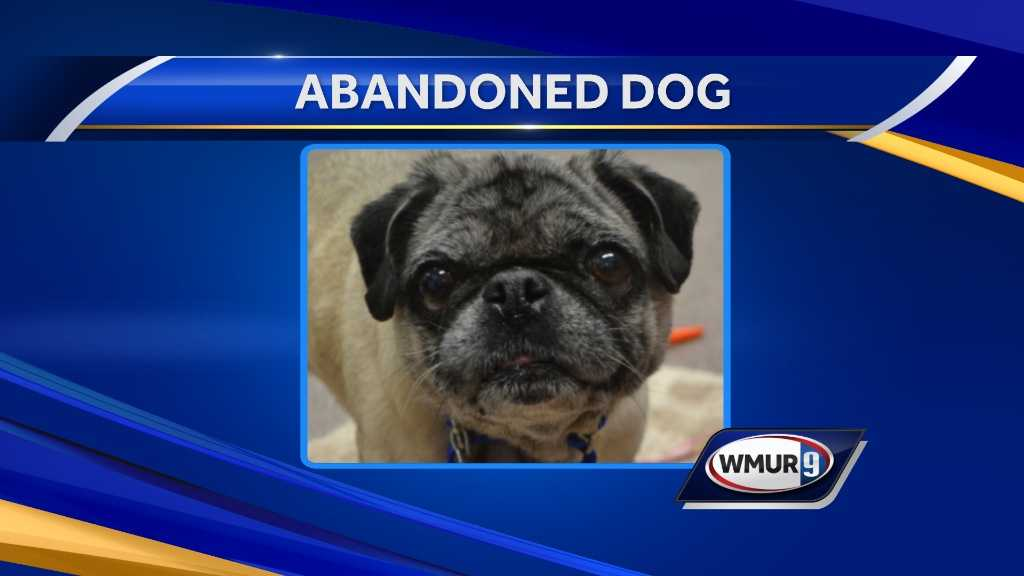 Stratham police are investigating after an elderly dog was abandoned outside the New Hampshire Society for the Prevention of Cruelty to Animals on Wednesday night.