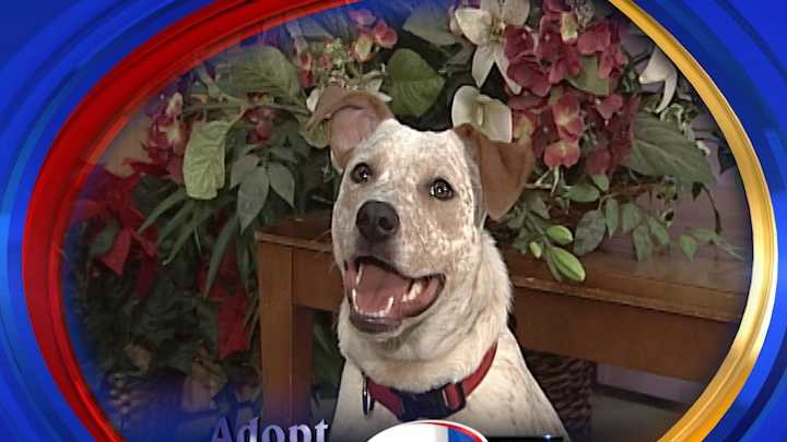 To adopt Sadie contact the Animal Rescue Network of New England:www.ARNNE.org &#x3B; 603-233-2872
