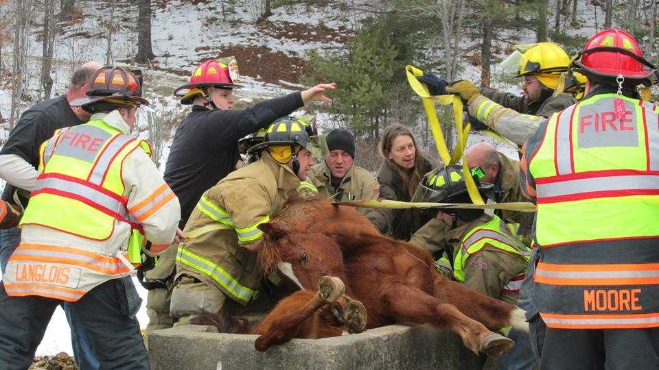 Firefighters had to rescue a horse in Goshen, New Hampshire, Sunday morning after it got stuck in a water trough.