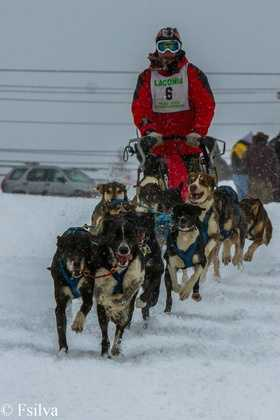 Cheer on the mushers and dogs at the Laconia World Championship Sled Dog Derby.