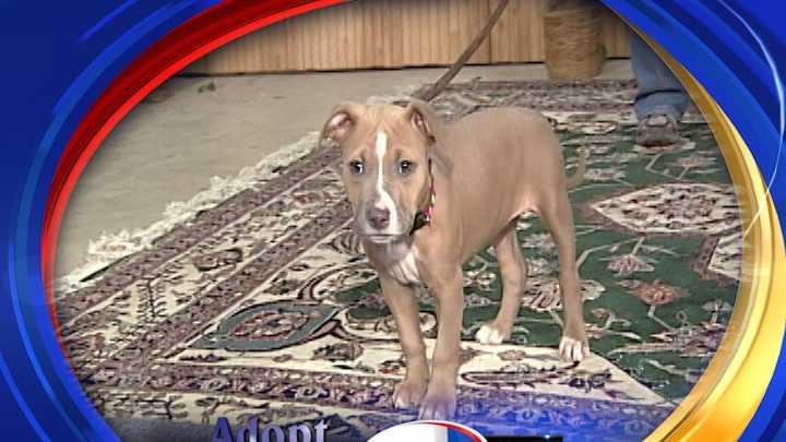 To adopt Vivian, contact PAWS New England:www.PawsNewEngland.com &#x3B; or e-mail: maryc.paws@gmail.com&#x3B; 603-396-6561