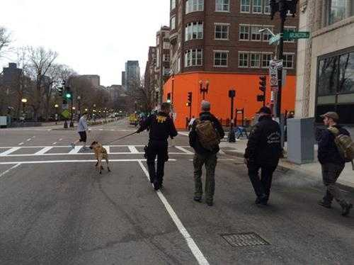 Safety officials and K9 near finish line
