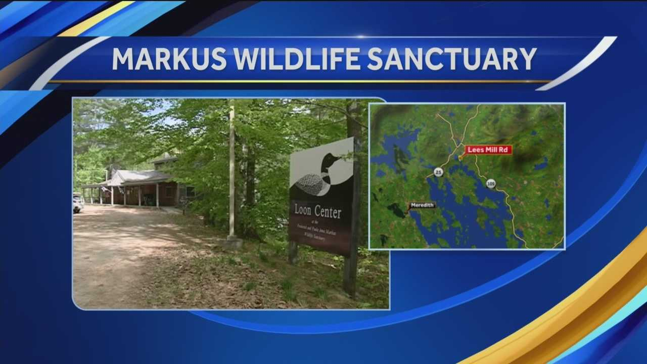 Chief Meteorologist Mike Haddad is visiting the Loon Center and Markus Wildlife Sanctuary in Moultonborough.