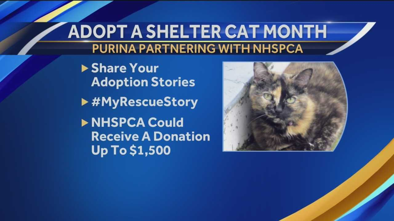 June is Adopt-a-Shelter-Cat Month, and Purina Cat Chow is partnering with 50 animal shelters around the country – including the New Hampshire SPCA to find forever homes for at least 2,500 cats.