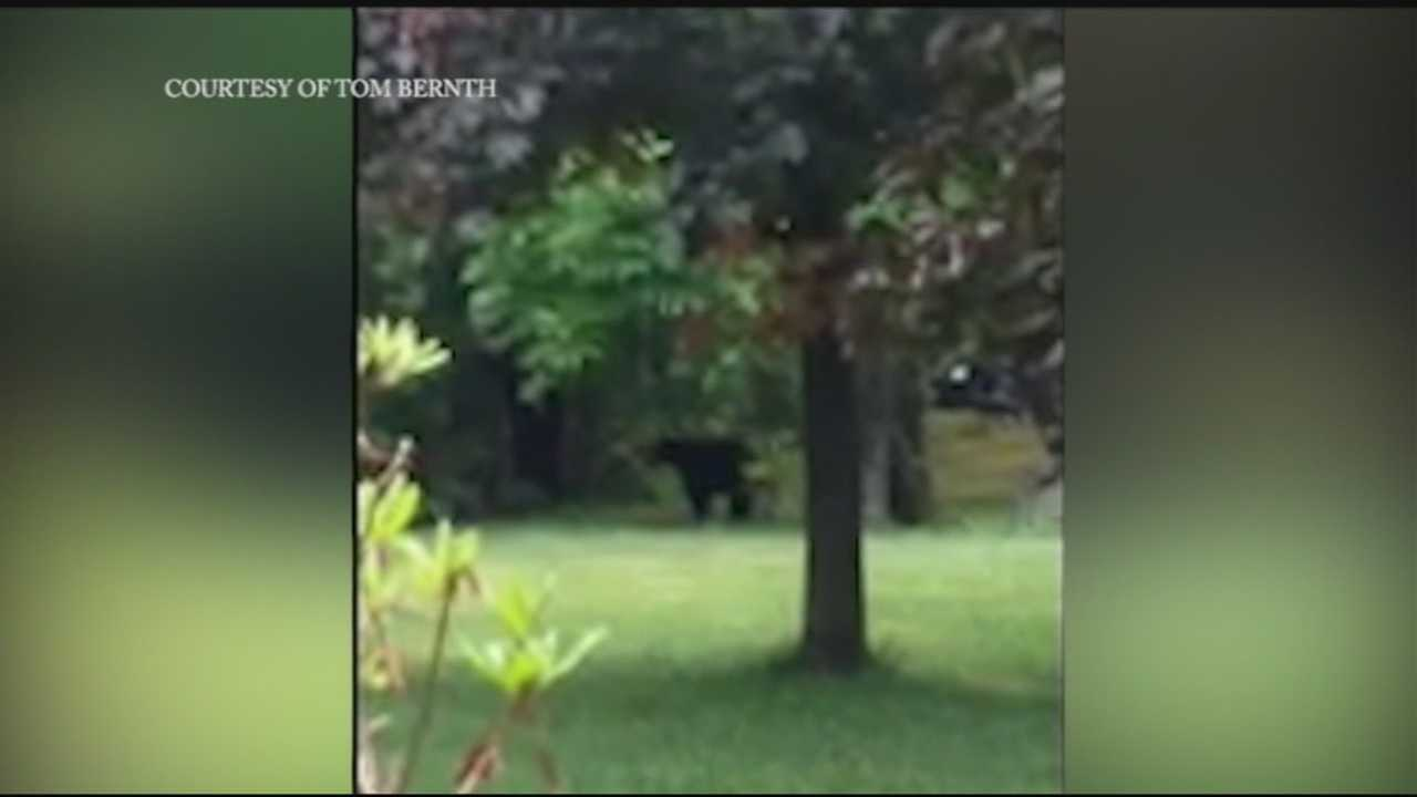 Tom Bernth and his family had a close encounter with a mother bear and her cubs in their own backyard.