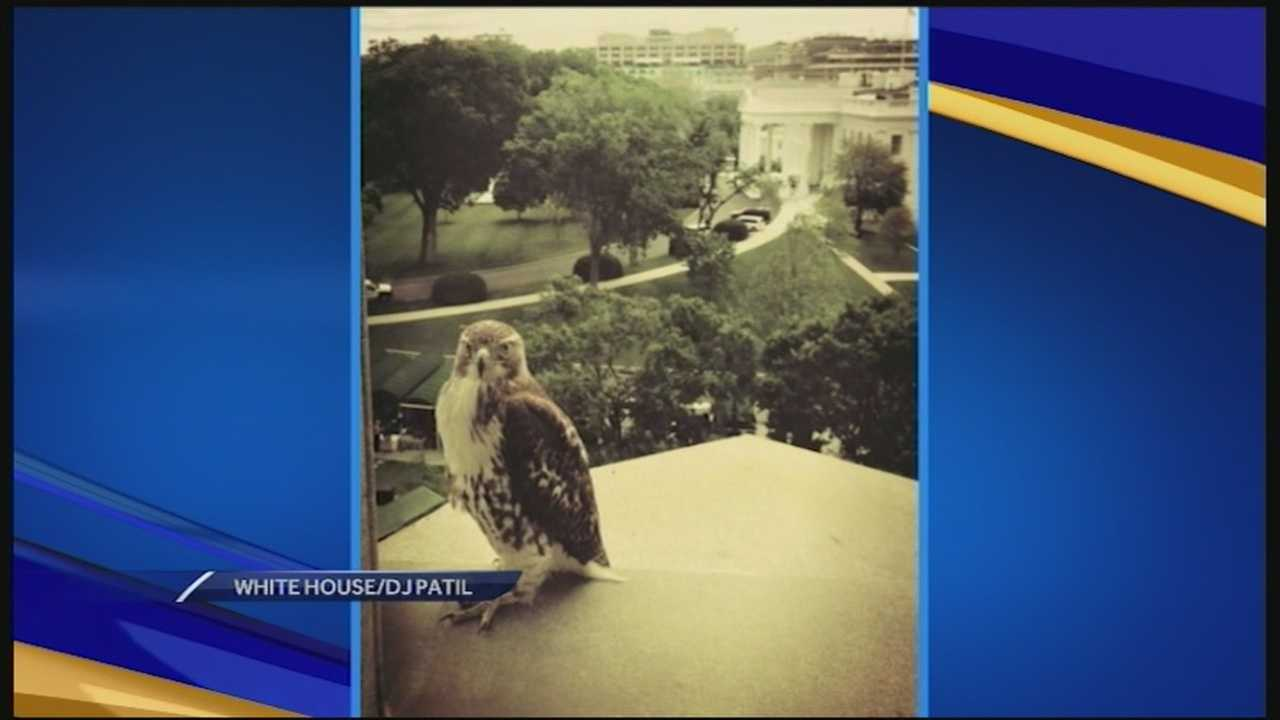 A fourth-grade class that drew national attention when its bill to name the red-tailed hawk the state raptor was ridiculed by some state lawmakers is getting a special invitation from the White House.