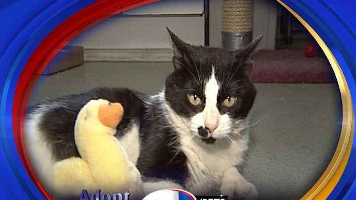 To adopt Stetson contact the Manchester Animal Shelter: 603-628-3544&#x3B;www.ManchesterAnimalShelter.org