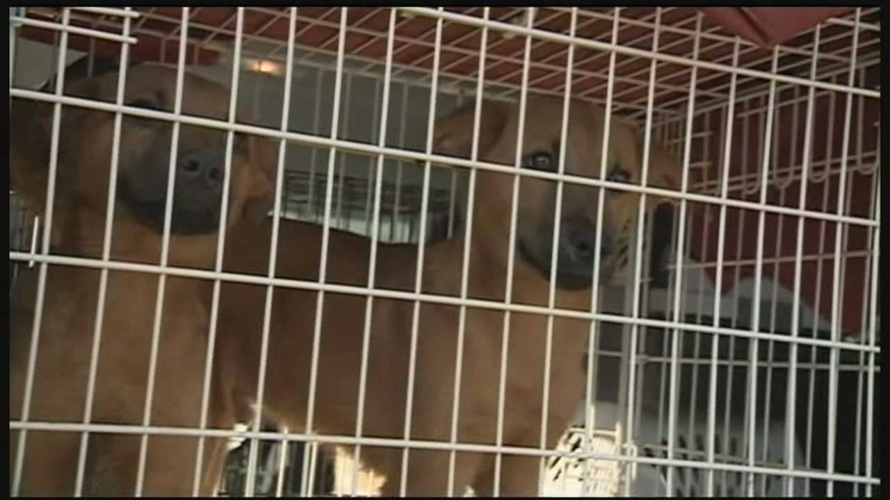 Dozens of dogs and 8 cats removed from an Ossipee doggie spa today.