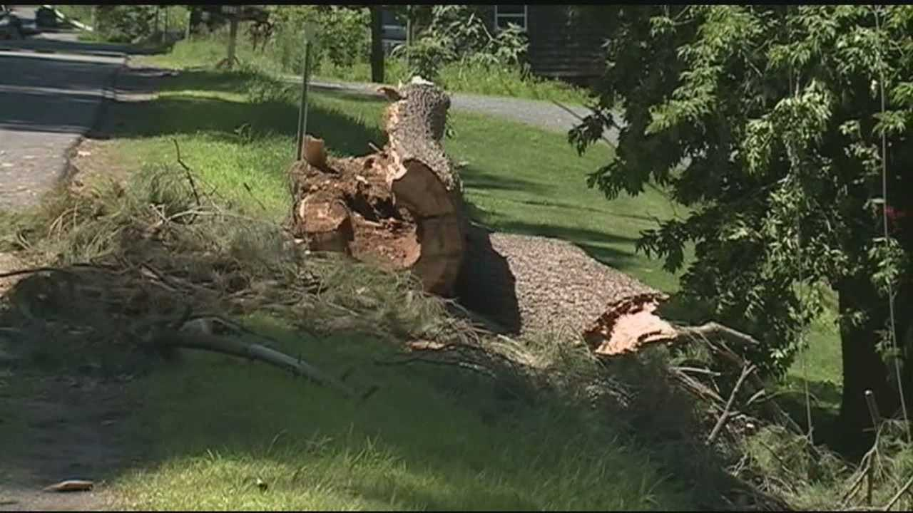 A man was killed Sunday when strong winds brought a tree down on top of his car while powerful storms crossed the state.