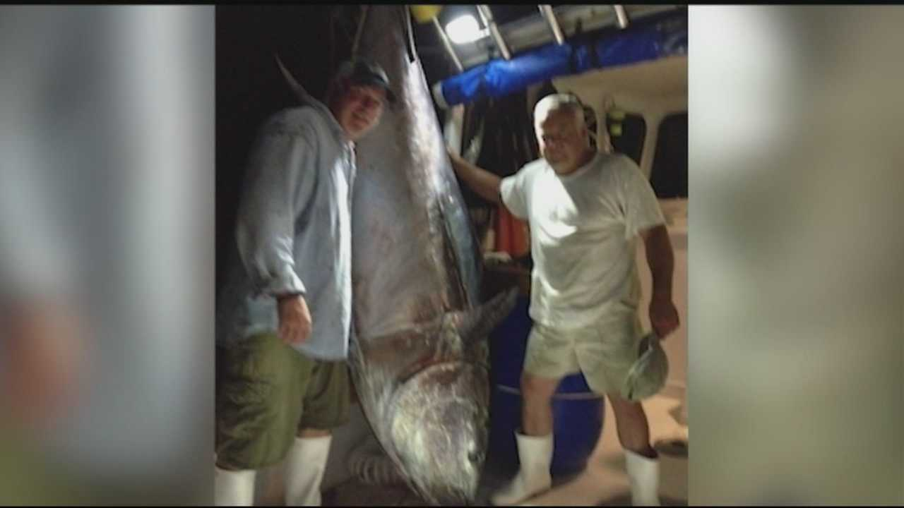 Some fishermen have been having luck recently hauling in giant bluefin tuna off the New Hampshire coast.