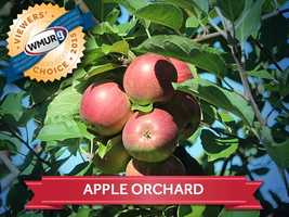This week, we asked our viewers where to find the best apple orchard in the Granite State. Take a look at the top responses!