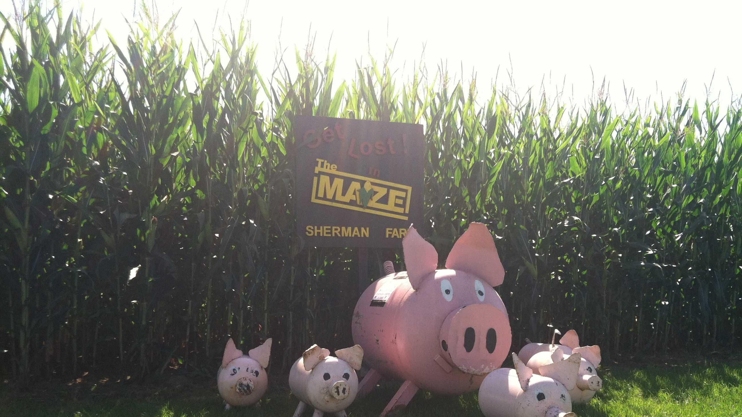 corn maze sherman farm.JPG