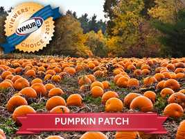 This week, we asked our viewers where to find the best pumpkin patches in the Granite State. Take a look at the top responses for some fall fun!