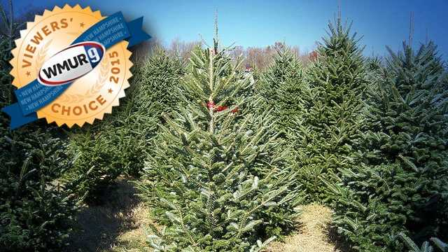 Viewers' Choice 2015: Best Christmas Tree Farms in NH