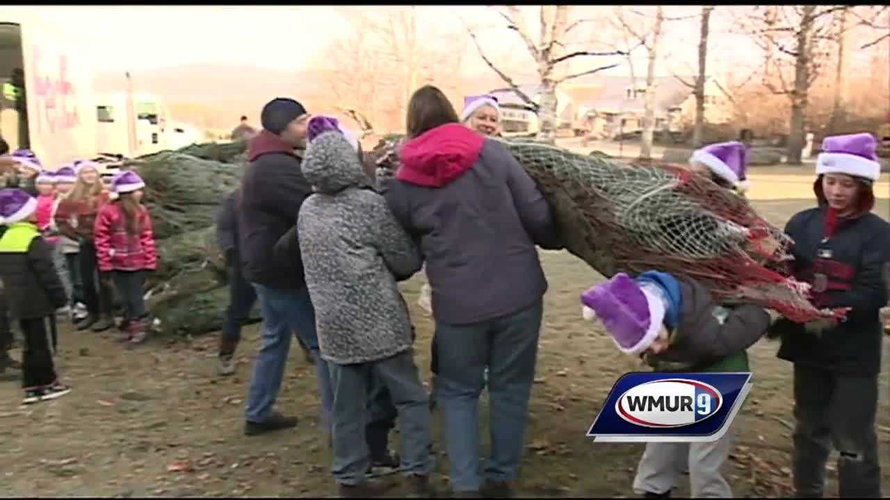 Farms in New Hampshire and Vermont have donated hundreds of Christmas trees for a program that says thanks to those who are serving the country.